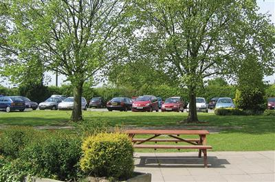 Trees Re-naturing parking
