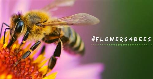 Planting social flowers for bees
